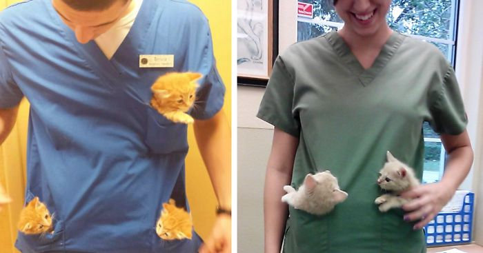 Perks of Working At the Animal Hospital Funny